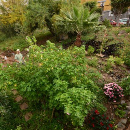Jardín Biológico - EOI Las Palmas II